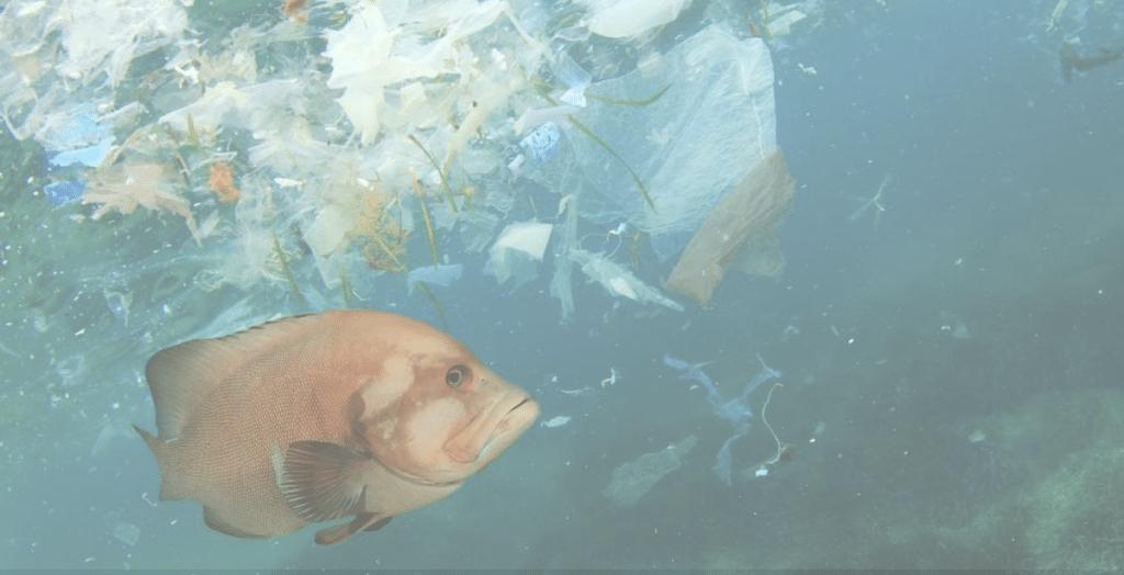 poisson dans l'océan qui nage autour du plastique